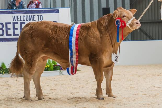"""Monty""   Beef Expo 2017 Overall Supreme Champion"