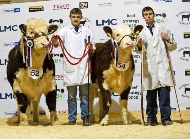 Calf Fair and Beef Expo NI to be repeated in 2016