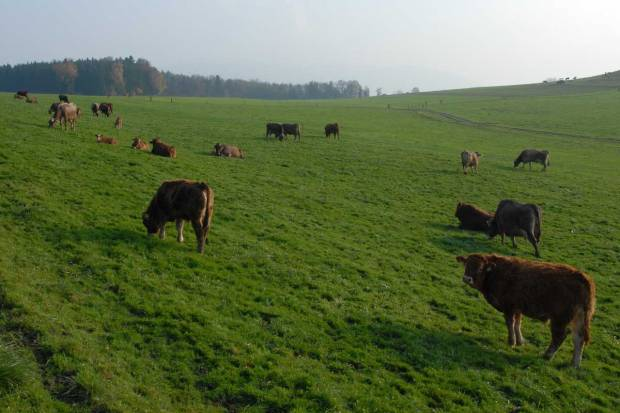 Time for accuracy on environmental sustainability of beef production in UK, urges National Beef Association