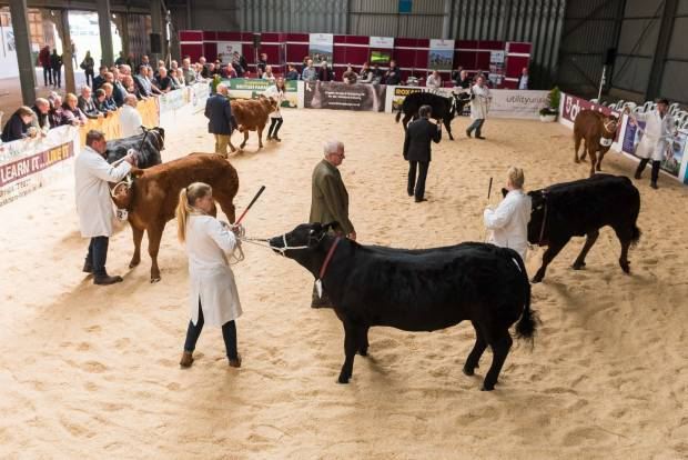 Beef Expo 17 Photo's from the Cattle Ring