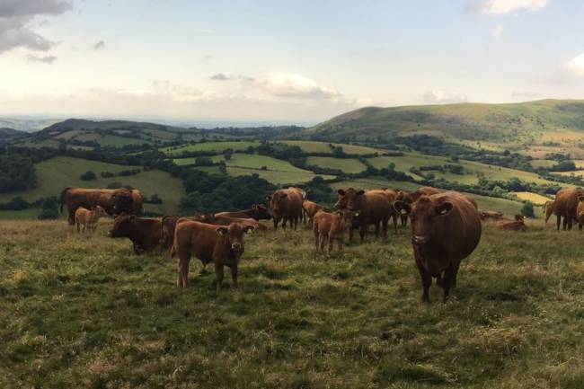 Beef Expo 2018 Farm Tours - James Evans, Partridge Farm, Linley, Bishops Castle