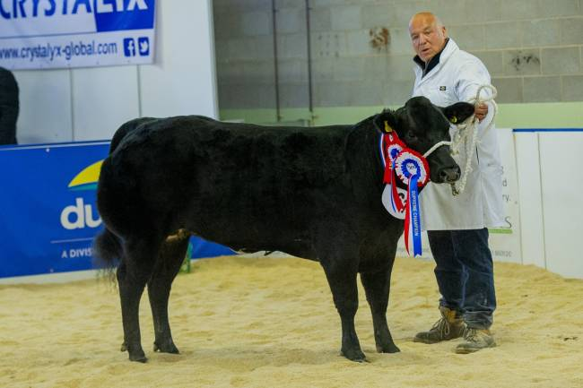 Huge support for cattle competitions at Beef Expo 2019