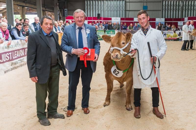 Heifer by a Limousin Sire - Winner