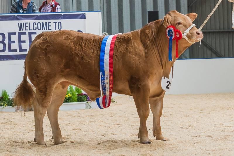 Overall Supreme Champion - Monty: B E Williams