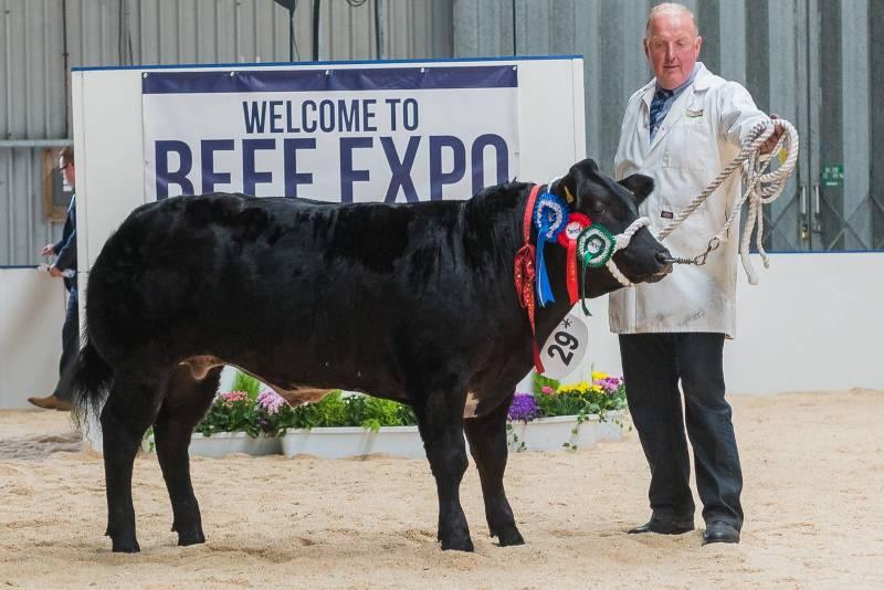 Reserve Champion Steer