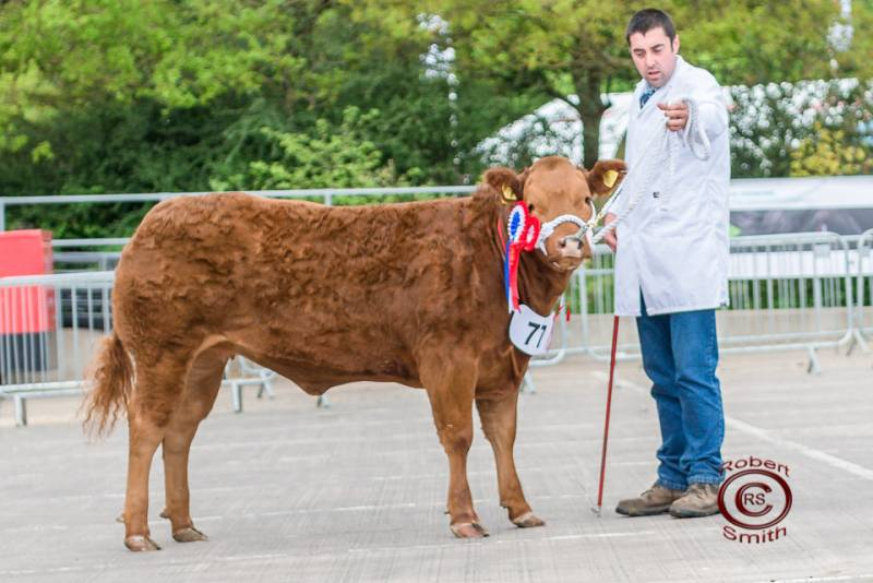 british beef industry case study Beef farmer, co-founder of ladies in beef great british beef week is a national celebration of our fantastic home produced beef - designed to tantalise the taste buds and put some sizzle in our succulent steaks, sunday roasts, cottage pies, and stir fries.
