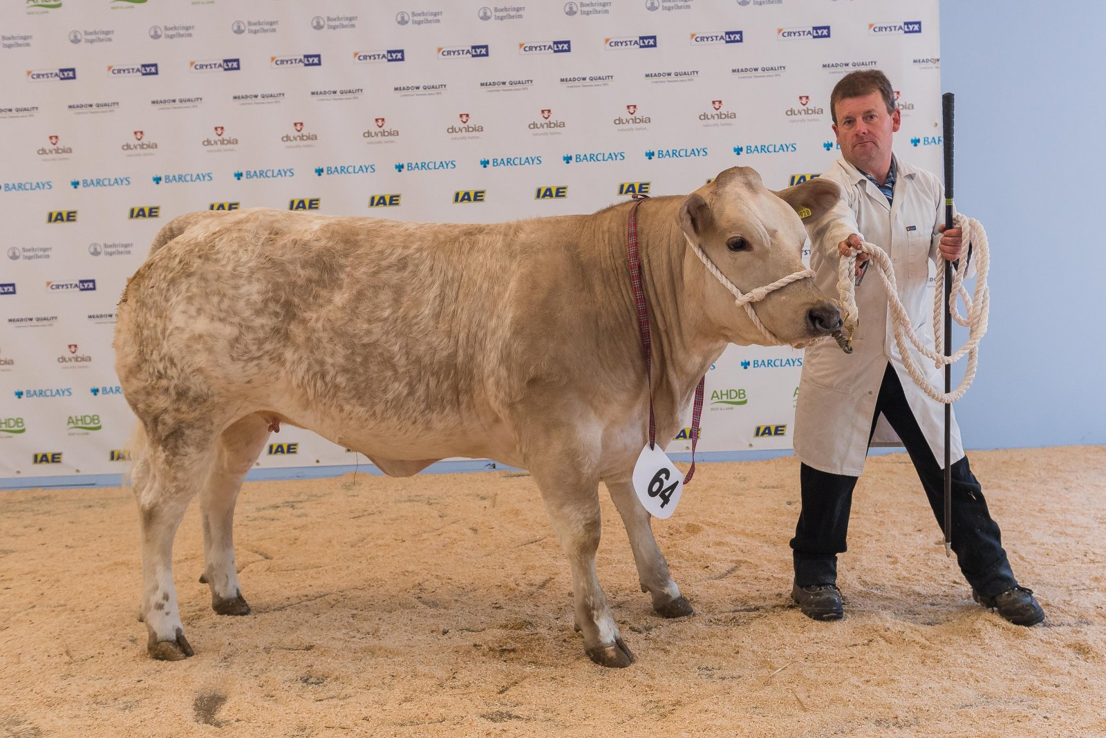 Heifer by any other Continental Sire - Winner