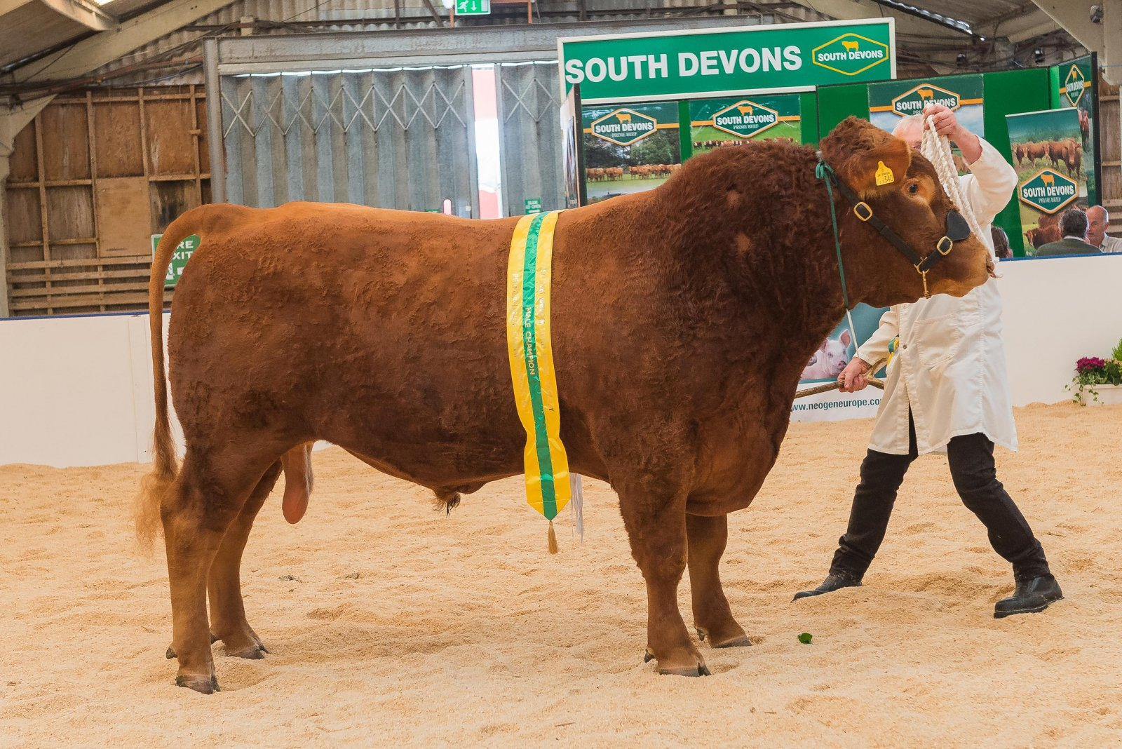 South Devon Reserve Champion