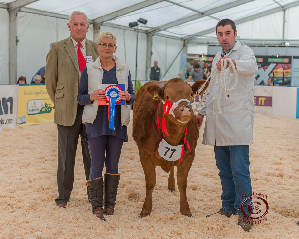 Heifer Champion