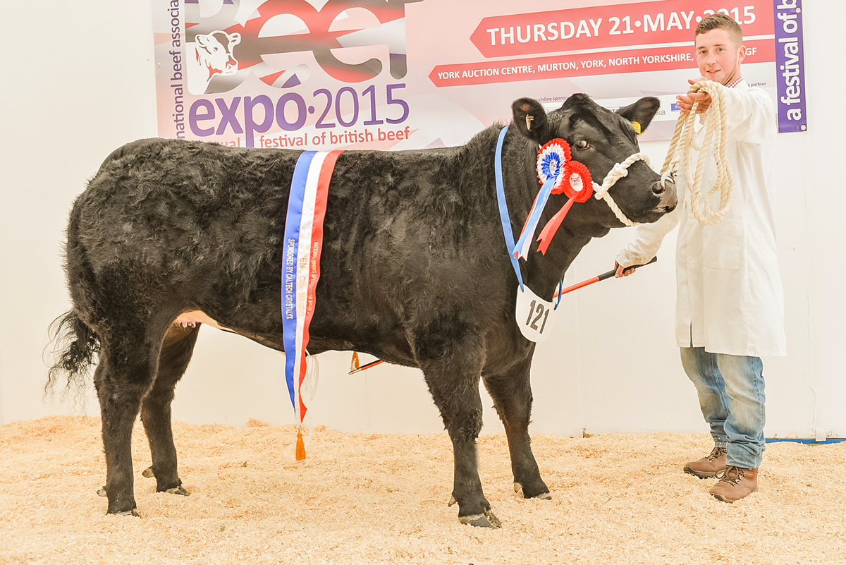 Overall Champion Beast NBA Beef Expo 2015