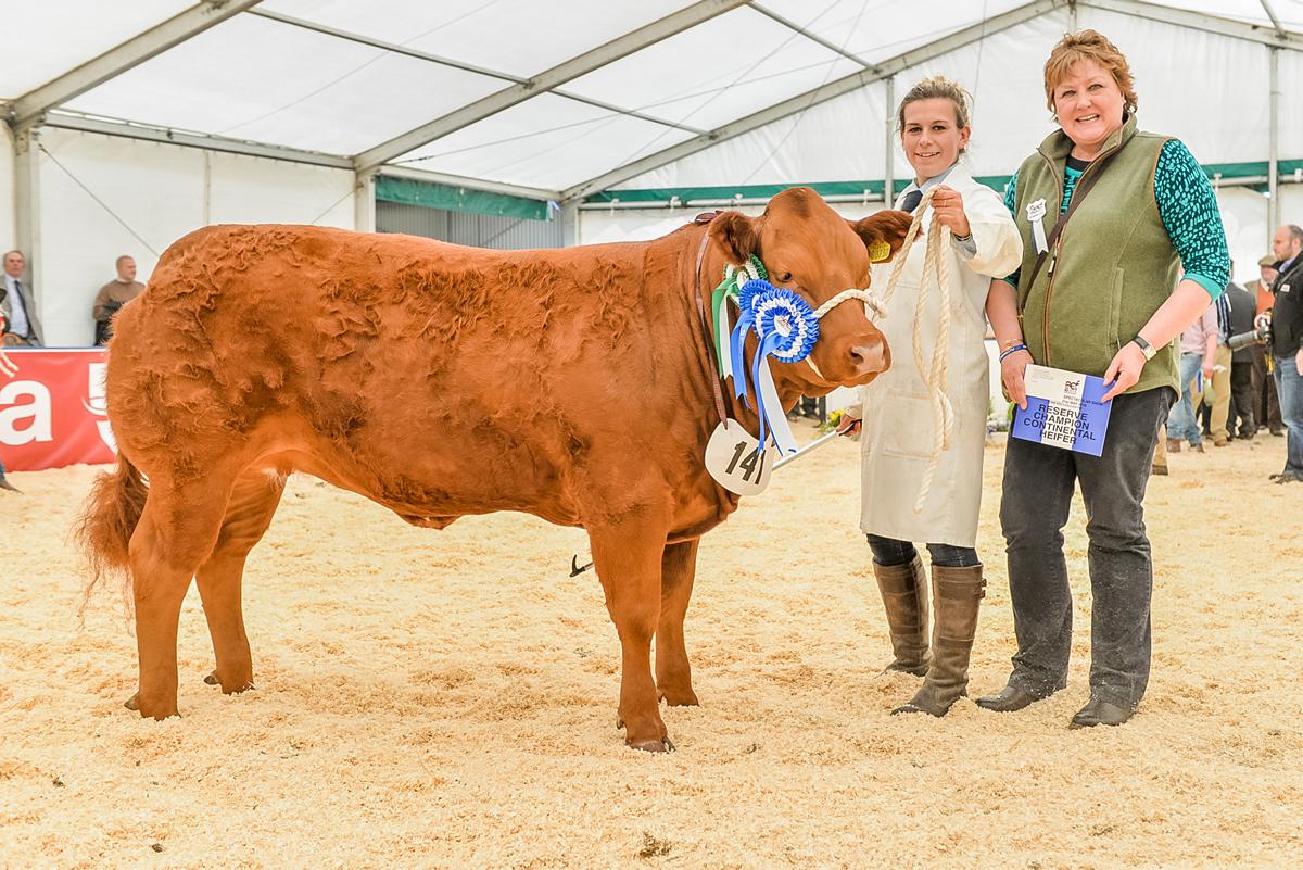 Reserve champion heifer